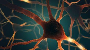 Wizualizacja neuronów w mózgu