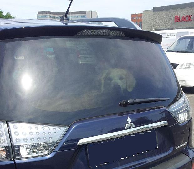 Pies zamkni�ty w rozgrzanym samochodzie na parkingu