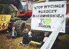 Czwarta blokada w Puszczy Białowieskiej - z udziałem Czechów i Rumunów