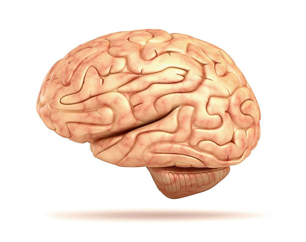 Mózg / 123RF