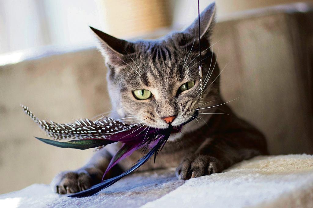 Kot chce się ocierać, co nie jest równoznaczne z tym, że my mamy ocierać się o niego. Wcale nie musi chcieć być głaskany