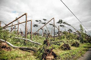 """Cel: szybko wywieźć drewno z lasów. Leśnicy przygotowują się do sprzedaży surowca """"z nawałnicy"""""""