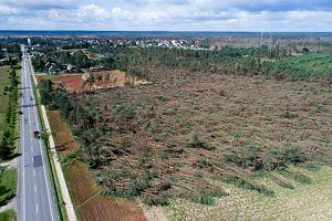 Leśnicy o wichurze: to była największa katastrofa w historii Lasów Państwowych