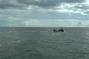 Wieloryb w Zatoce Gdańskiej. Straż graniczna uwolniła ssaka