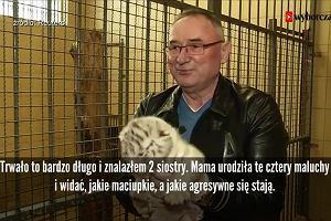 Światowa sensacja w Borysewie. Urodziły się czworaczki białego tygrysa