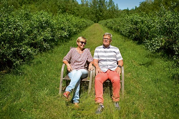Hanna i Jan Karwowscy na swojej plantacji borówek.