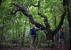 10 mln z�. Bardzo droga wycinka drzew w Nowosolnej