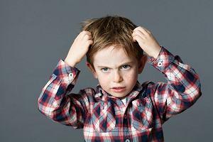 Wszy - nie taki niecodzienny problem. Rodzice przedszkolaków, uczniów (i nie tylko) powinni być dobrze przygotowani