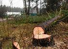 Słowa Kaczyńskiego napędziły wycinki drzew w Olsztynie