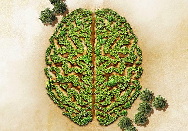 Rośliny słyszą, a przynajmniej reagują na dźwięki - samo odtwarzanie odgłosów wydawanych przez gąsienice chrupiące liście (bez dotykania liścia) skłoniło roślinę do produkcji odstraszających związków chemicznych.