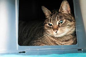Hodowca go��bi zastawi� pu�apk� na kota. Dosta� p� roku wi�zienia w zawieszeniu
