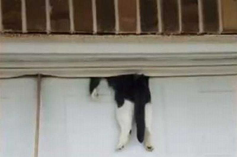 Przytrzasnął kota