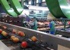 Komisja Europejska nie wyklucza rekompensat dla polskich producent�w owoc�w i warzyw