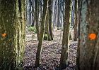 Czas zadba� o same lasy. Raport Najwy�szej Izby Kontroli to kolejny dzwonek alarmowy