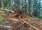 """""""Dewastacja lasu w sercu Bieszczadów"""". Rzecznik Lasów Państwowych: To planowana wycinka drzew"""