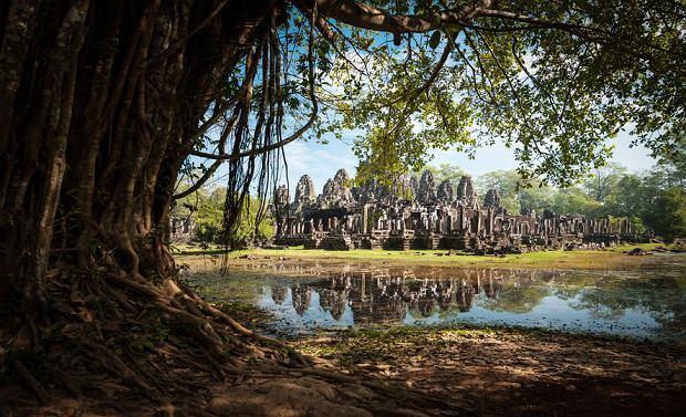 Cywilizacja odkryta w dżungli