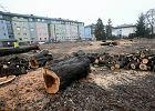 """PiS nowelizuje """"Lex Szyszko"""". Wycinka drzew będzie mniej opłacalna"""