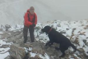 Zabłąkany labrador na szczycie Giewontu. Turyści ściągnęli go w dół za pomocą kabanosa