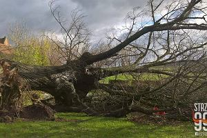 Orkan Grzegorz nad Wrocławiem i Dolnym Śląskiem. 100 tys. gospodarstw bez prądu, zerwane dachy, połamane drzewa [RELACJA, ZDJĘCIA]