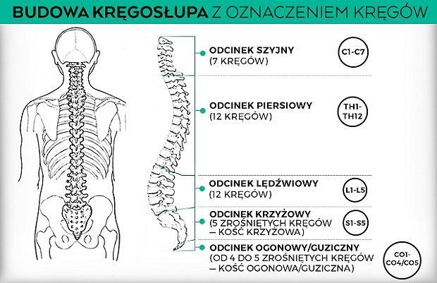 Oznaczenia poszczególnych kręgów