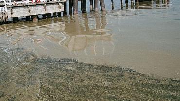 Sinice nad Bałtykiem. Lista zamkniętych kąpielisk