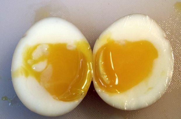 Клетк-усваивая белки яйца, то споры усилие для организма