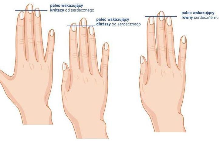 Co mówi o tobie długość placów u dłoni