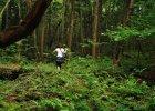 Las samobójców w Japonii. Każdego roku życie odbiera sobie w nim kilkadziesiąt osób. Nikt nie wie dlaczego akurat tutaj [+18]
