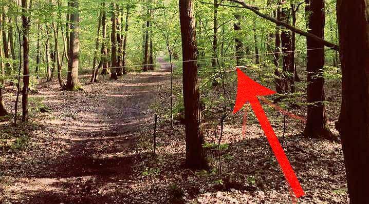 Szkoła jazdy konnej ostrzega przed pułapkami w lesie