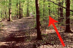 """Długa, prosta ścieżka w podwarszawskim lesie. Pułapkę trudno dostrzec. """"Zachowajcie uwagę!"""""""