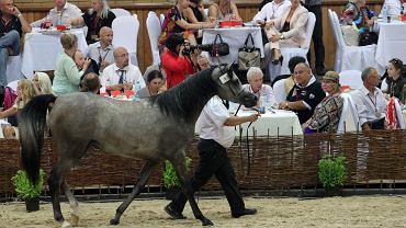 Janów Podlaski 2011. Licytacja podczas aukcji koni arabskich. W centrum Shirley i Charlie Watts