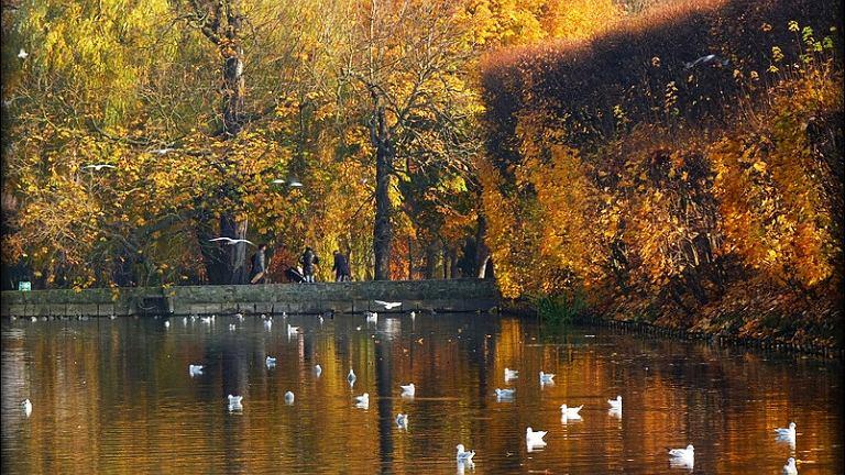Jesień nad stawem w Parku Oliwskim, Gdańsk Oliwa.