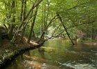 Roztocza�ski Park Narodowy, Szumy nad Tanwi� / fot. Shutterstock