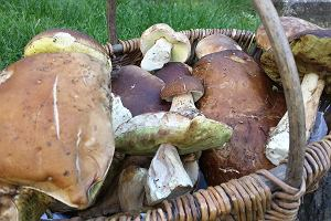 Grzyby już są w lasach! Nie tylko kurki, ale i borowiki. Co można zebrać i jak to wykorzystać w kuchni?