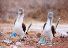 Galapagos. Jedne z najbardziej odizolowanych wysp na Ziemi, gdzie zwierz�ta nie uciekaj� na widok cz�owieka
