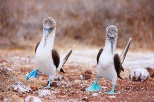 Galapagos. Jedne z najbardziej odizolowanych wysp na Ziemi, gdzie zwierzęta nie uciekają na widok człowieka
