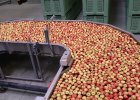 Jab�ka w Rosji zdro�ej� po embargo na owoce z Polski