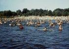 Kąpielisko po praskiej stronie Wisły, 1958 rok.