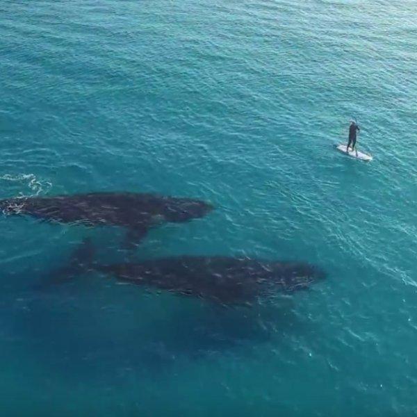 Niezwyk�e spotkanie u wybrze�y Australii. Zobaczy� w wodzie ciemny kszta�t. Zapami�ta to do ko�ca �ycia