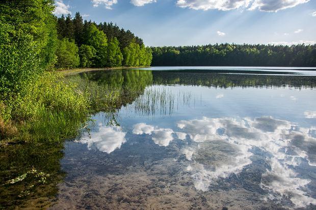 Najbardziej przejrzyste jezioro w Polsce. Podwodny świat widać jak na dłoni