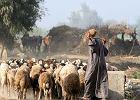 Polscy archeolodzy badaj� pierwszych pasterzy Afryki