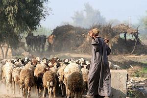 Polscy archeolodzy badają pierwszych pasterzy Afryki