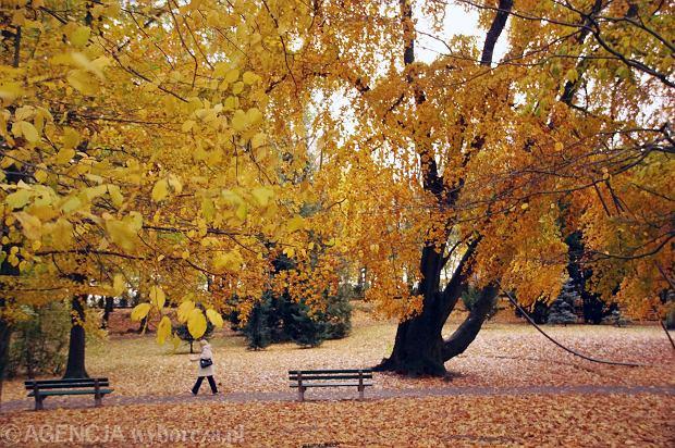 Jesień na Wzgórzach Piastowksich