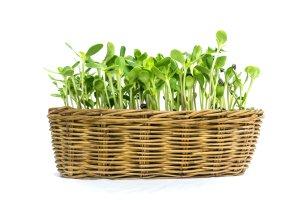 Kie�ki s�onecznika - zdrowe uzupe�nienie diety