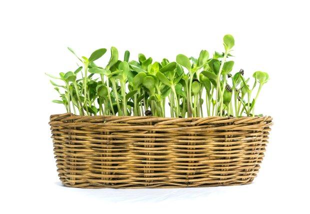 Kiełki słonecznika - zdrowe uzupełnienie diety