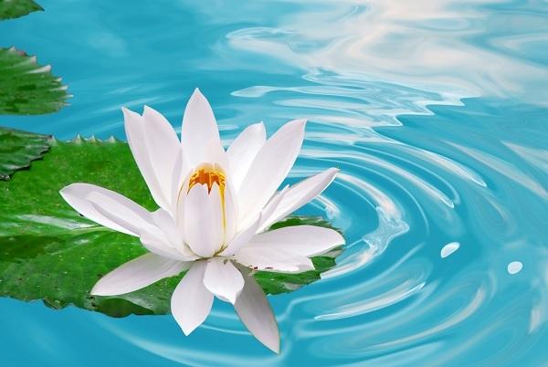 Jak pozosta� niewzruszonym kwiatem lotosu
