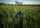 ONZ. Ro�nie handel dzie�mi na �wiecie