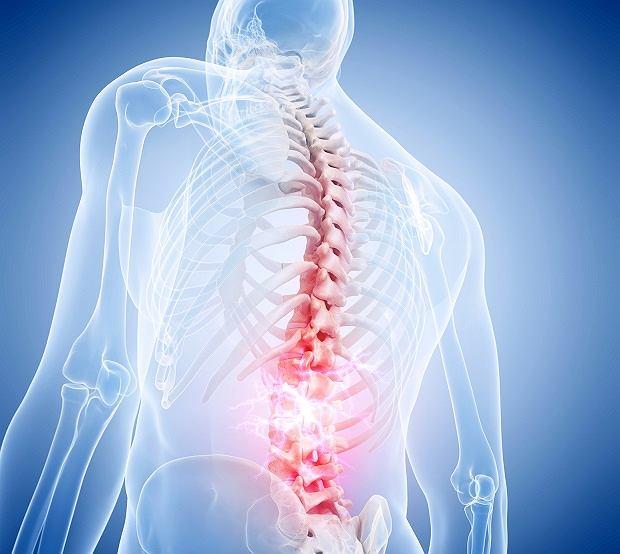Kręgosłup - budowa, oznaczenia kręgów, choroby