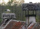Sukces pierwszej w Polsce bocianiej adopcji w Żywkowie