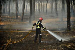 Płonie las w Hiszpanii. Ewakuowano ponad 60 polskich turystów